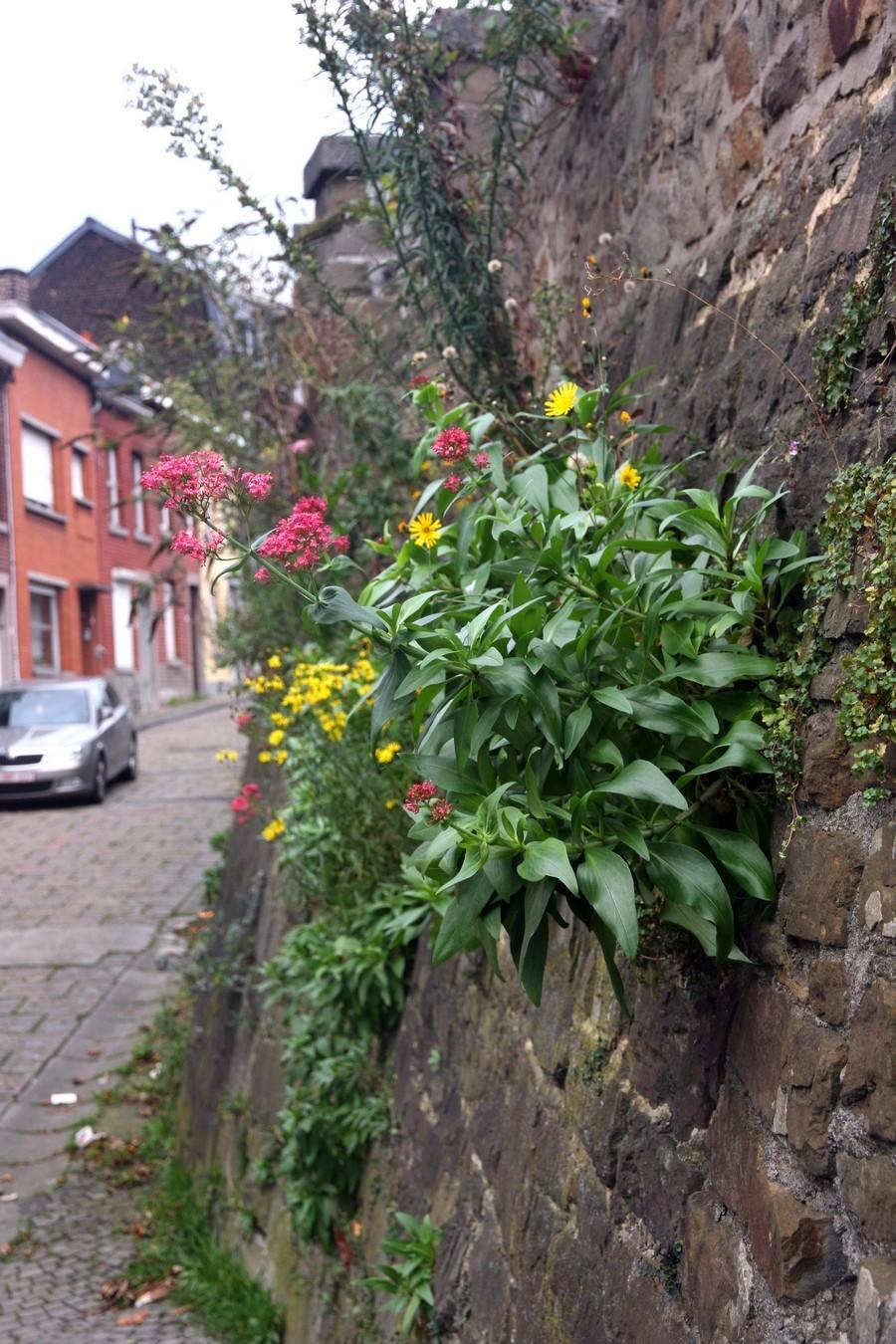 Gt maillage vert urbagora asbl for Emploi responsable espaces verts